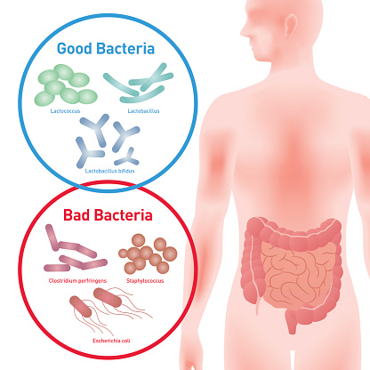 Prebiotics vs Probiotics