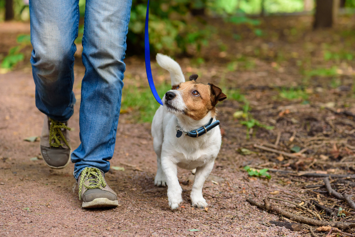Walking Your Dog Can Help Keep Your Moving
